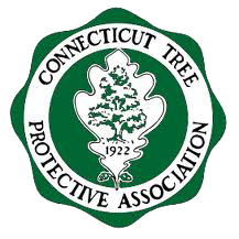 https://www.givingtreect.com/wp-content/uploads/2018/02/connecticut-tree.png